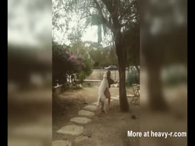 Dog Attempts To Rape Girl